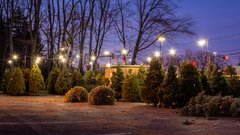 A Christmas tree lot in Middleton, Wis.