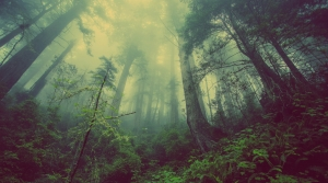 Read full article: Ecologist Shares How Trees Talk To One Another Using Underground Network