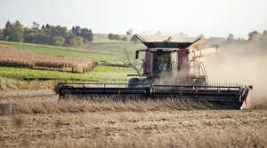 dust flies up behind a combine harvesting soybeans