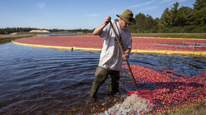 Read full article: Wisconsin Cranberry Research Station Offers New Opportunities To 'Move The Industry Forward'