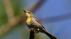 Read full article: Spring Bird Migration Is Well Underway