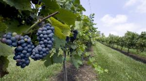 Read full article: Wisconsin Wineries Becoming A Major Player In State's Economy