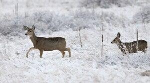 Read full article: Deer Harvest Fell By 25 Percent In 2019 Gun Hunting Season