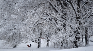 Read full article: Some Wisconsin Communities See Record-Breaking Snowfall Totals