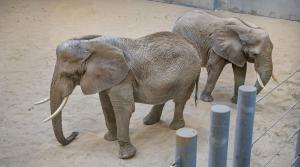 Read full article: Milwaukee County Zoo's New African Elephant Exhibit To Open Next Month