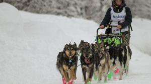Read full article: An Earthquake, 150 Miles And 27 Hours Later, Wisconsin Teen Wins 2021 Jr. Iditarod Sled Dog Race