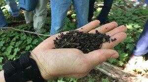 UW-Madison Arboretum, Brad Herrick, coffee ground-like soil, invasive worms, jumping worms