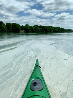 large cyanobacteria bloom on Lake Monona
