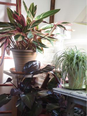 indoor garden, tovah martin