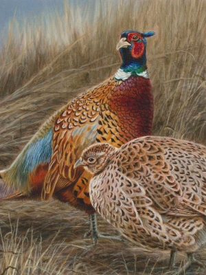 Brian Kuether is the winner of the 2020 pheasant stamp contest
