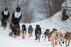 Blair Braverman'sdog sled team runs in the snow during the 2019 Iditarod in