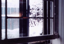 Home of a window looking out at snowy tree