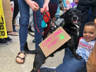 Spike the dog and Oliver at the climate strike