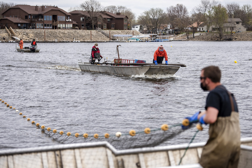 Two boats float toward the shore as a worker in waders pulls on a large net from inside a boat.