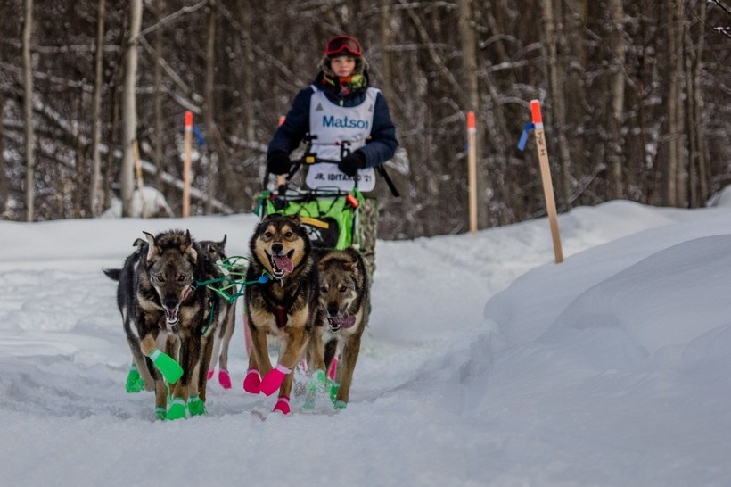 Morgan Martens Wins Jr. Iditarod
