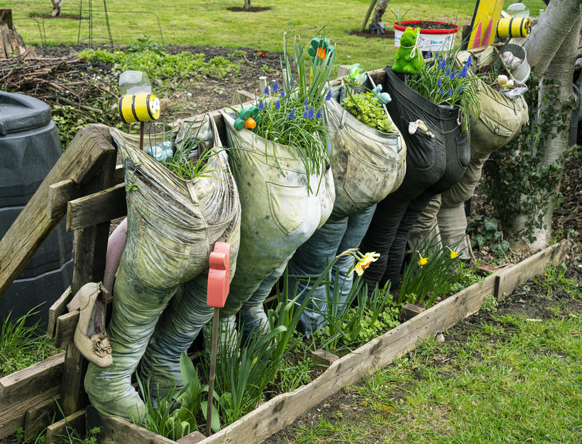Old trousers recycled as growbags for herbs