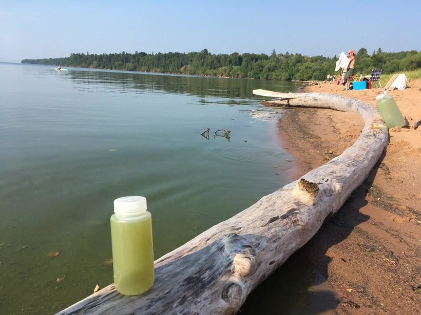 blue-green algae bloom 2018
