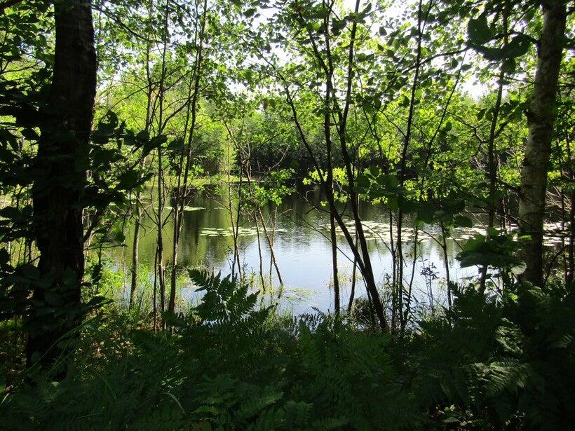 Pond off Hildebrand Lake Drive in Oneida County.