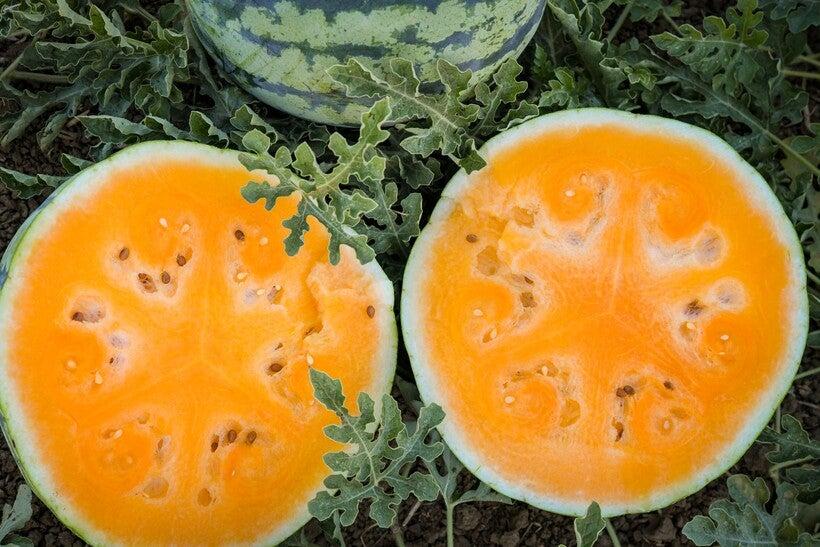Leelanau Sweetglo Watermelon