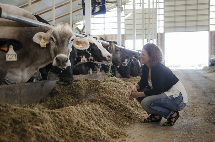 MariekePenterman, cows, dairy, gouda, Holland, dutch