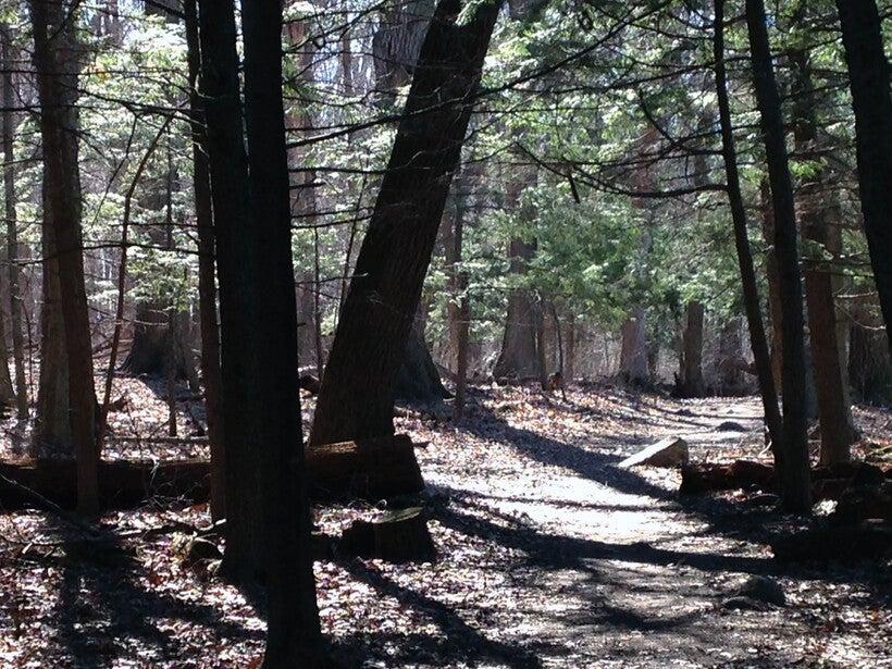 Trees in the UW-Madison Arboretum