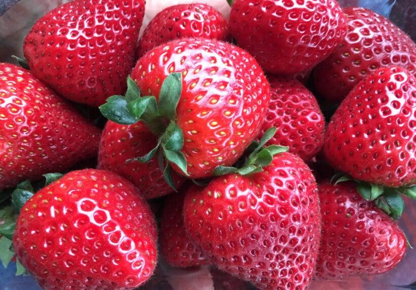Handful of riupe strawberries.